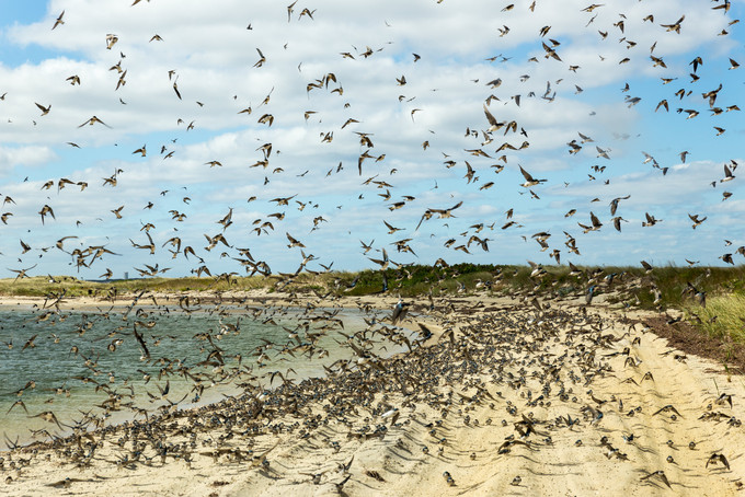 Chappaquiddick Birds