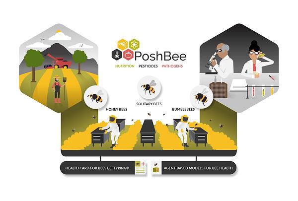 PoshBee overview.jpg