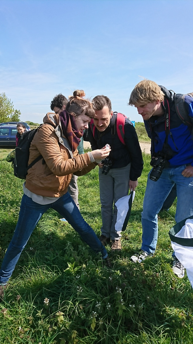 The hunt for rare bumblebees at RSPB Dungeness; a lab trip