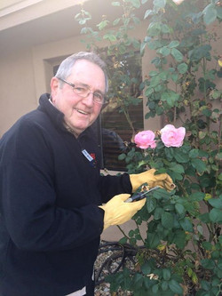 Norbert picking roses for the ladies of the house