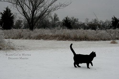 Black Cat in Winter