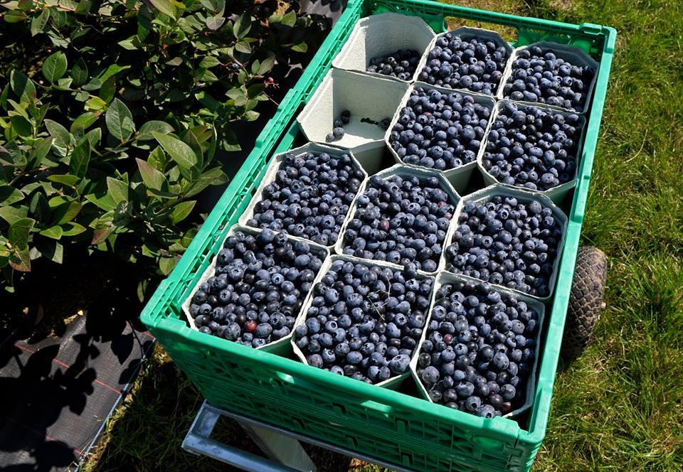 табла за горски плодове.jpg