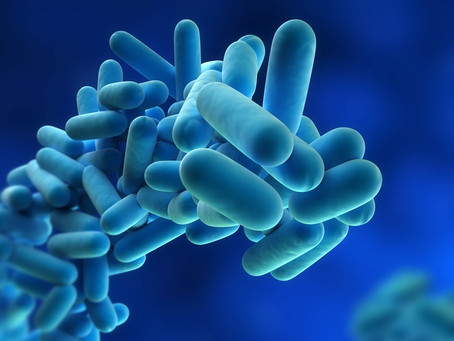 Legionella - what is it?