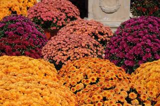 Fall into Winter Garden