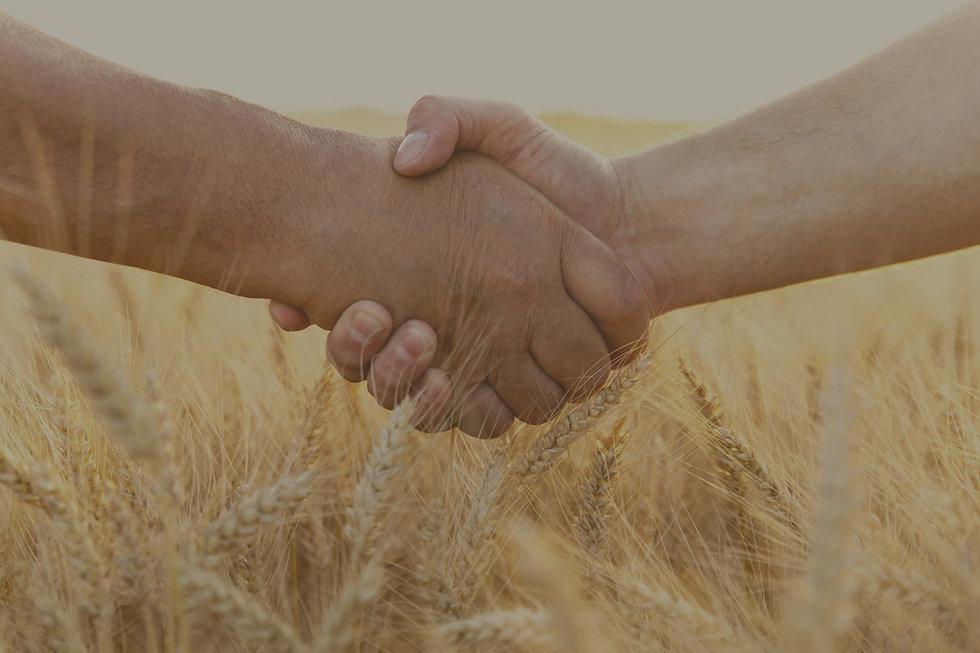 Farmers_handshake_over_the_wheat_crop_ed