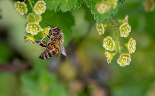 Welcoming bees and butterflies into the garden
