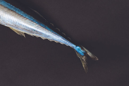 Mackerel cover photo.jpg