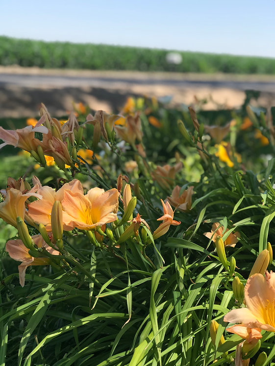 CRVW flowers and corn.jpg