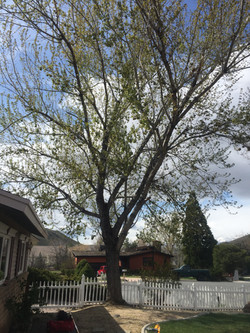 Reno Tree service clearing a house