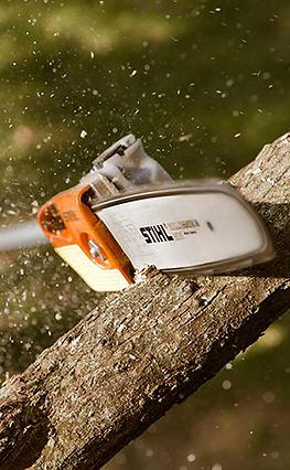 ISA Certified tree service prunning