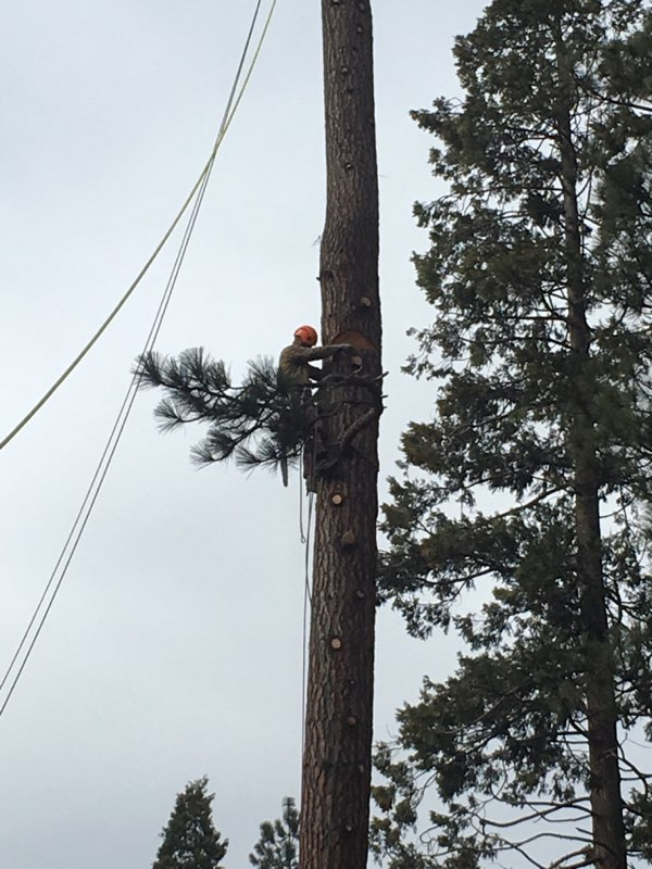 Reno Sparks local tree service