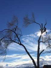 Sparks Tree Removal