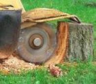 Tree Service removing stump in Reno