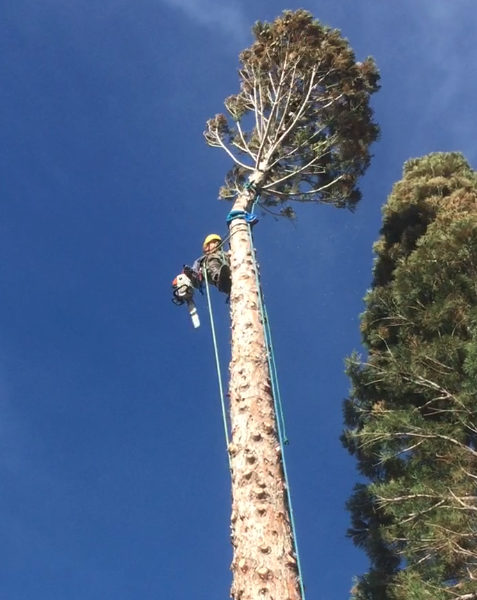 Reno Tree Removal service
