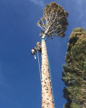 Reno Tree Removal