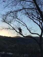 Tree Prunning in Reno