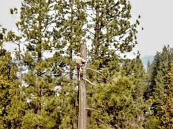 Reno's Hazard tree removal Service