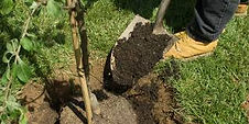 Reno tree planting service