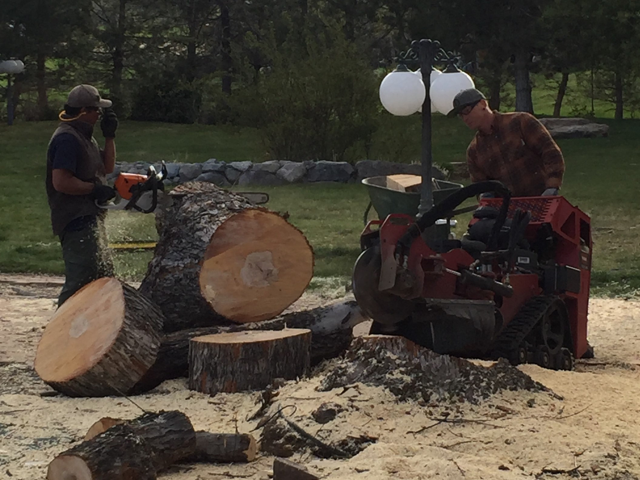 Reno Tree Stump Removal