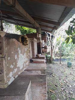 Hive shelter.jpg