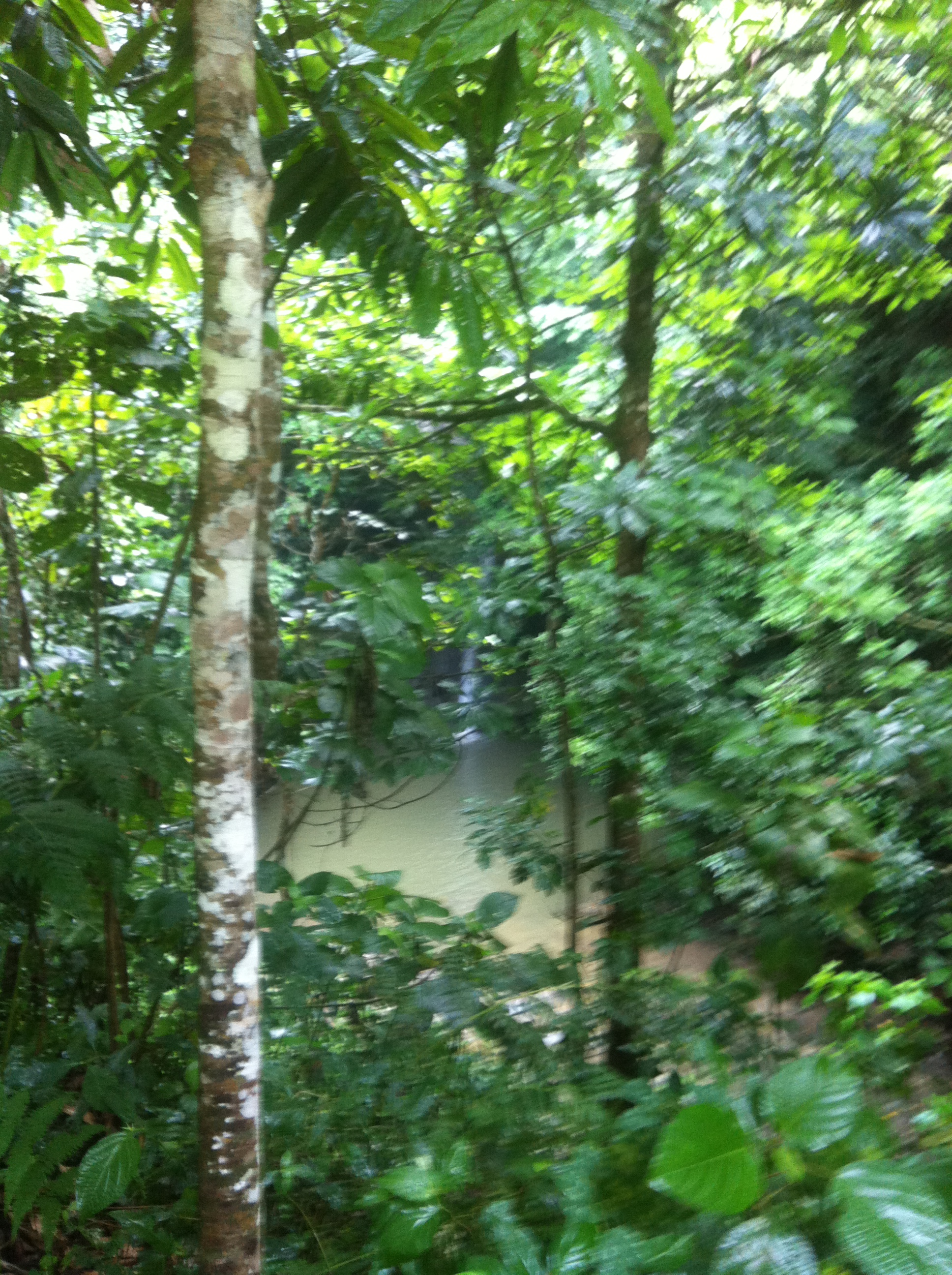 Totonacapan Jungle.JPG