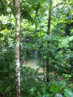 Totonacapan Jungle.JPG