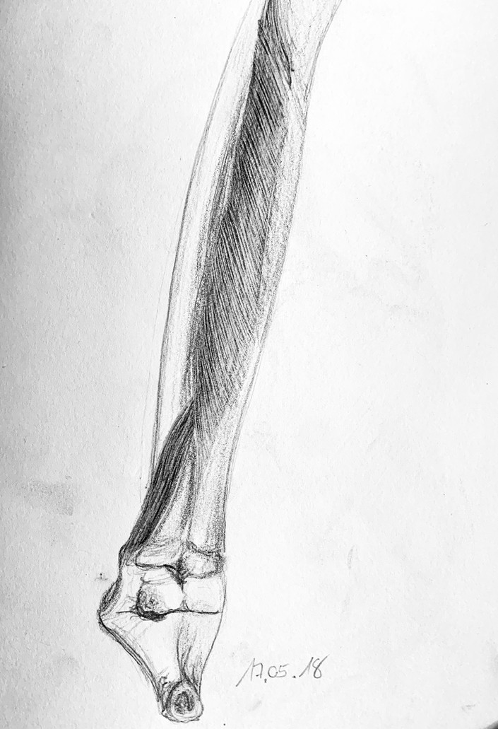 Anatomy | © Christian Baumgarten