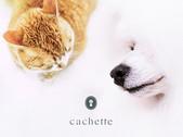 cachetteのオフィシャルブランドに!