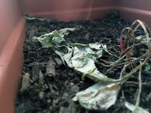 Dead planter