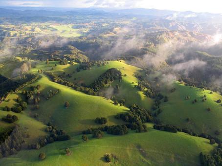 Navigating the environmental legal jungle
