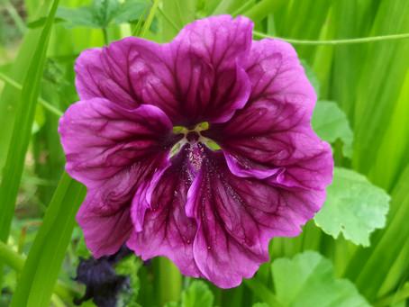 September in my garden