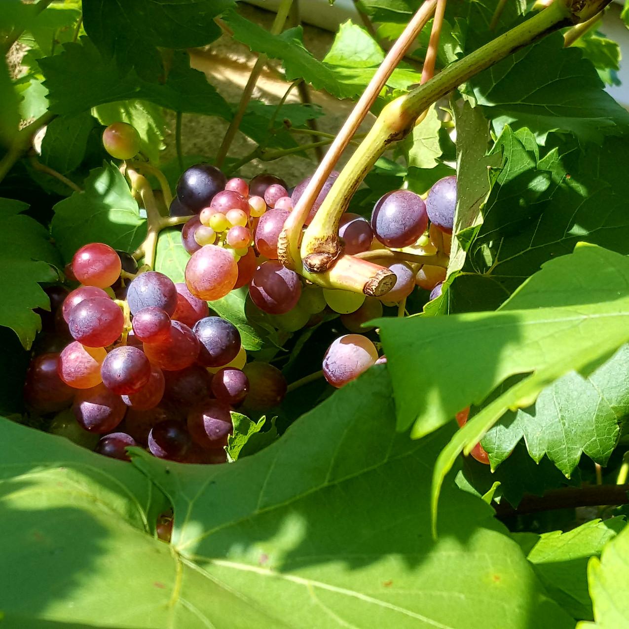 october-in-my-garden_10