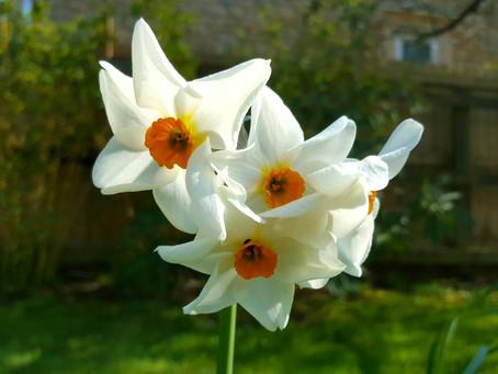 April in my garden