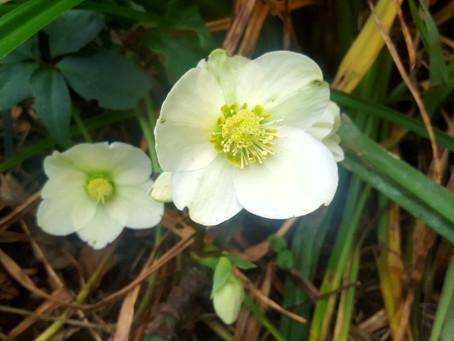 December in my garden *