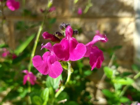 October in my garden