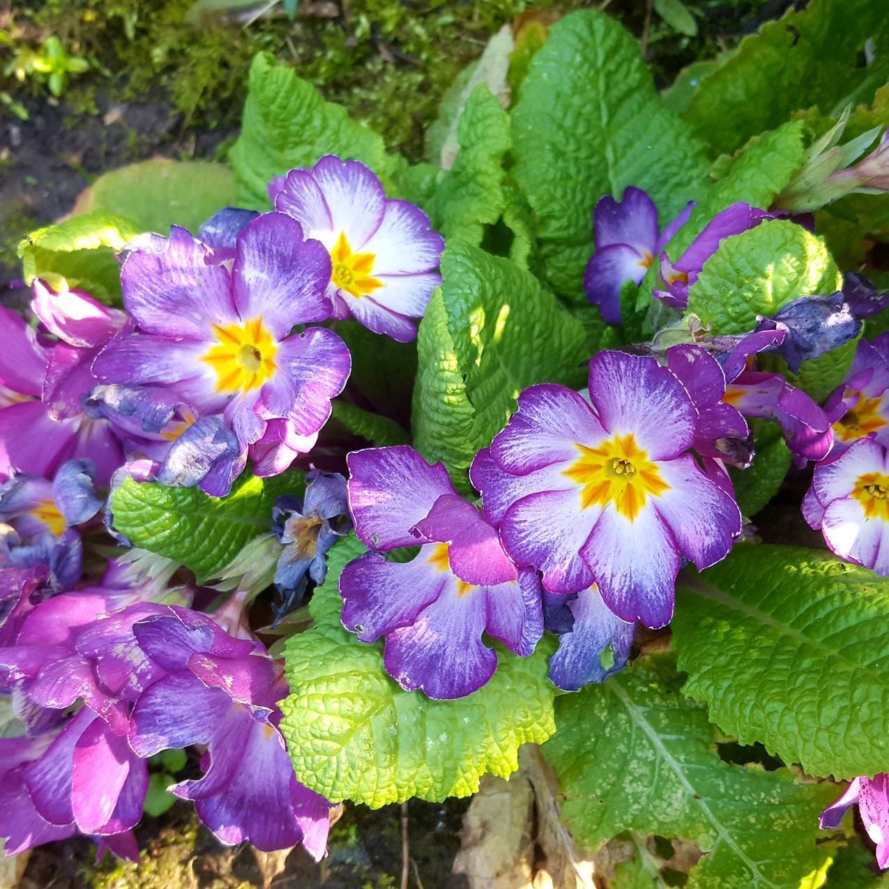 april-in-my-garden_06