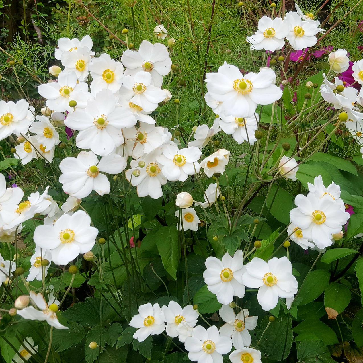 september-in-my-garden_12