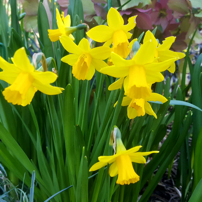 march-in-my-garden_10