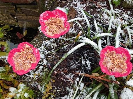 December in the Garden