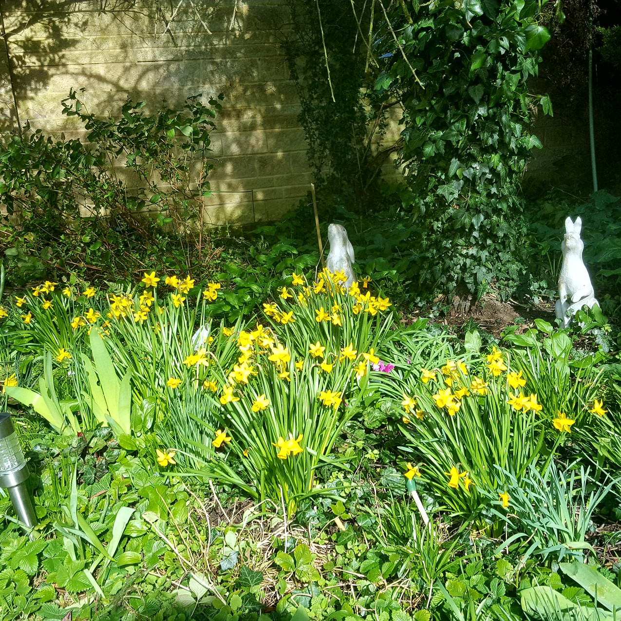 march-in-my-garden_07