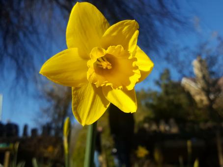 March in the Garden