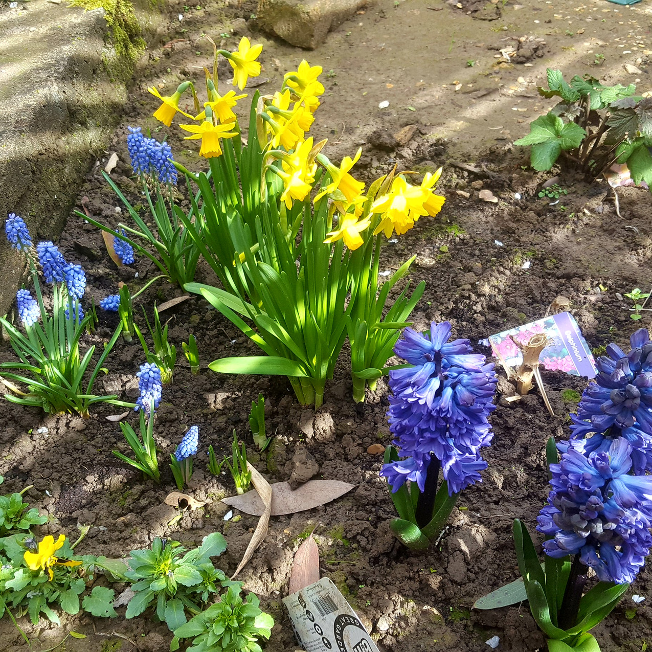 march-in-my-garden_29