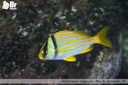 Vida marinha do litoral catarinense