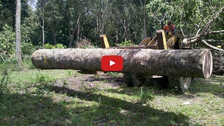 Vídeo de apresentação da Poupança Verde Mudas