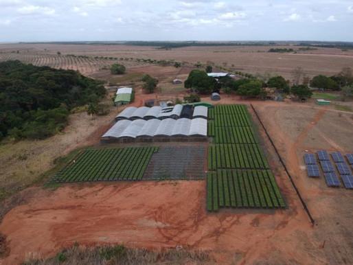 Empresário investe na maior floresta de mogno africano do mundo