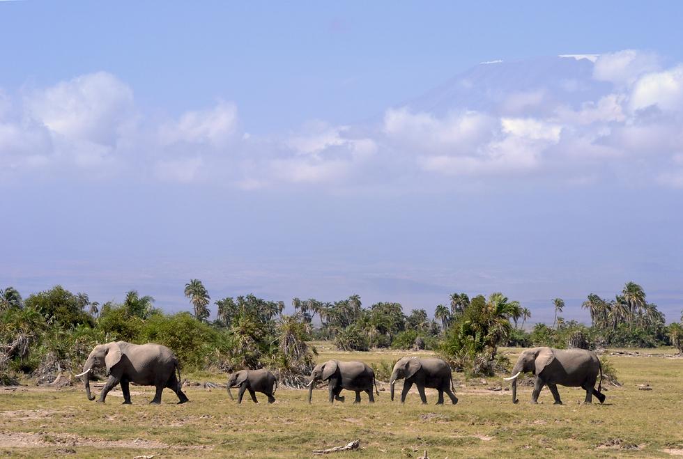 elephants_Kenya.png