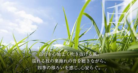 hill_img4.jpg