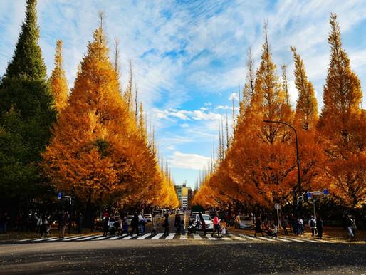 金黃葉片灑落的神宮外苑,曾是東京人心中最美的城市風情畫