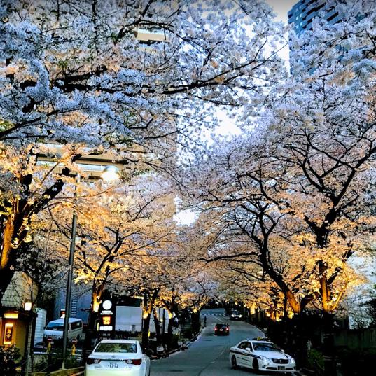 赤坂方舟之丘.png