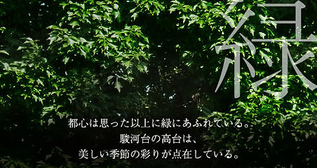 hill_img2.jpg